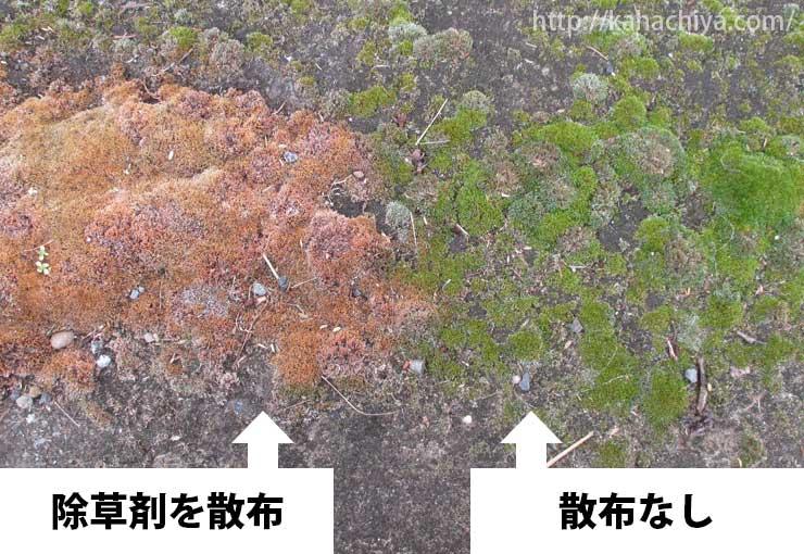 除草剤散布前と散布後の比較