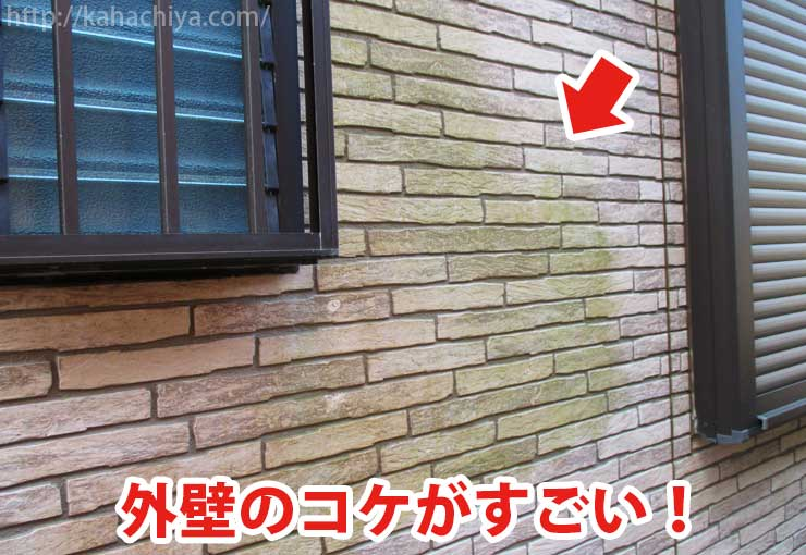 外壁のコケ