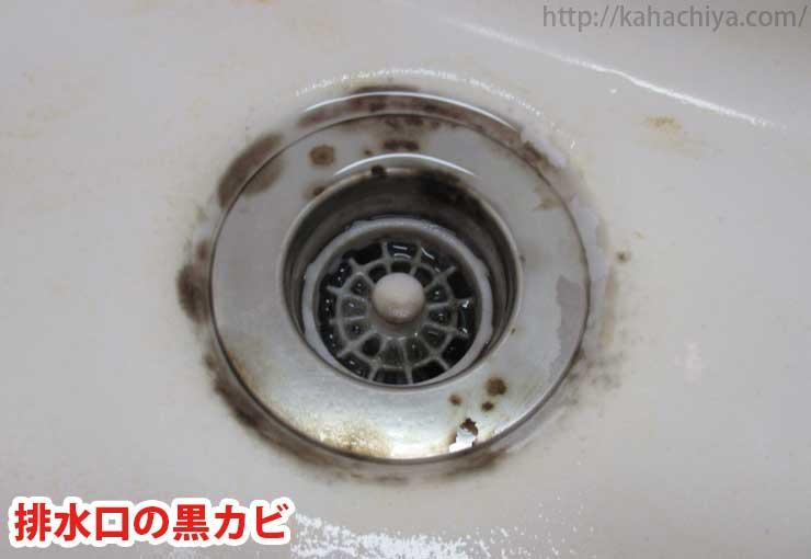 排水口の黒カビ
